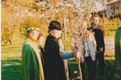 Istituto U. Patrizi - messa a dimora olivo