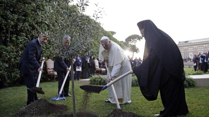 olivo-per-la-pace-in-vaticano